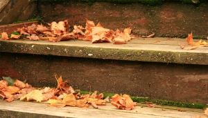 Blog-#-Autumn-Leaves